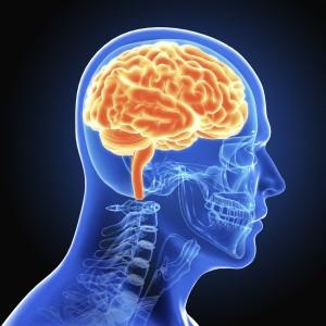 Brain_Medium
